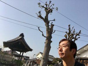 楠木は丸坊主・・・