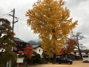 西方時さんの銀杏の木