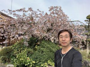 境内のしだれ桜