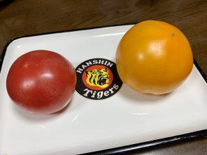 両方トマト