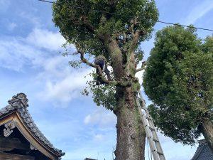 木の上の坂根さん