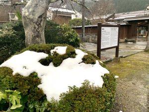 植木の上に雪が少し