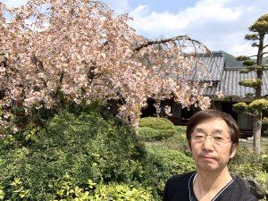 まだまだ綺麗な枝垂れ桜