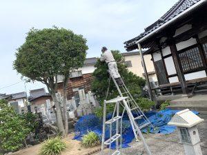 植木剪定作業