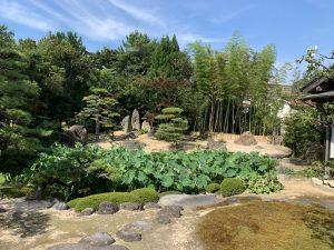 ハス池のある庭
